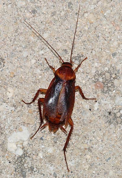 how to get rid of roaches in dishwasher door